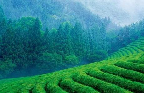 """2015贵州 茶业""""加速度"""""""